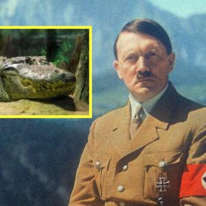 """""""Krókódíll Hitlers"""" dauður – Lifði af sprengjuárásir og náði 84 ára aldri"""