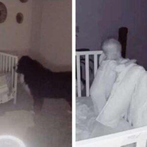 Foreldrarnir treystu hundinum ekki með nýfædda barninu – Skjátlaðist hrapalega