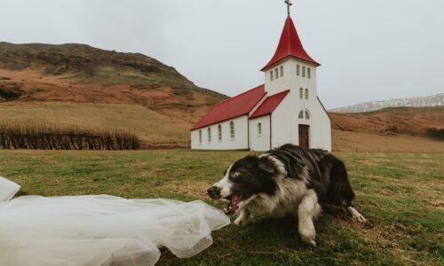 Hundur við Ásólfsskálakirkju stelur senunni í alþjóðlegri keppni